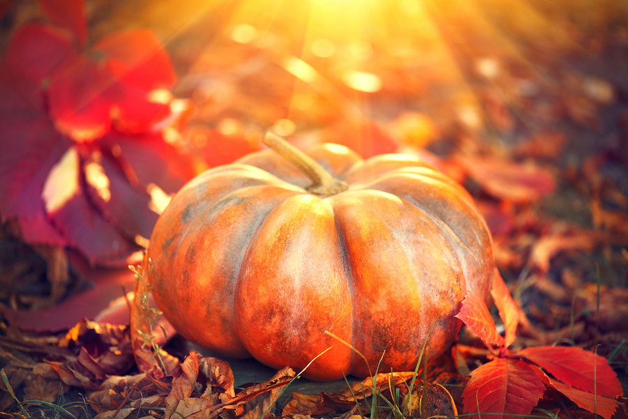 It's Pumpkin Day, so here's a handy guide to making the most of this