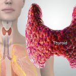 diagram of thyroid gland