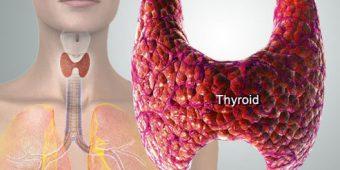 diagram of thyroid gland